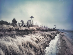 Infrared of the South Shore of Naval Live Oaks in the Morning Fog (Lawrence Lazare) Tags: navalliveoaks infrared fog emeraldcoast pensacola pensacolafl florida
