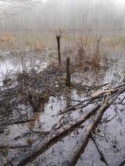 Pond mist (Thomas Cizauskas) Tags: mist fog pond park urbanpark naturepreserve winter dekalb dekalbcounty georgia