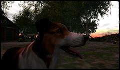 My best portrait ever! ^.^ (Shara Thiva) Tags: second life sl dog puppy portrait shug dagger