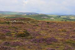 Photo of England / Devon - Dartmoor National Park