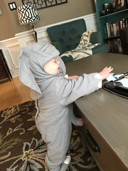 "Sam as an Elephant for Halloween • <a style=""font-size:0.8em;"" href=""http://www.flickr.com/photos/109120354@N07/49548748012/"" target=""_blank"">View on Flickr</a>"