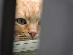 DSCN1890 (keepps) Tags: animal cat switzerland suisse schweiz fribourg