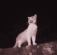 Frane the Nightstalker (Elvis L.) Tags: cat animal pet nightphotography wall tree