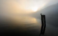 Good Morning, Barnet Fog (2 of 2) (rhino!) Tags: sunrise vancouver bc canada fog barnetmarinepark nopeople outdoors nature water tranquility sky tranquilscene scenicsnature beautyinnature idyllic