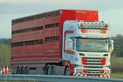 Scania R580 Patrick Bros Livestock (SR Photos Torksey) Tags: transport truck haulage hgv lorry lgv logistics road commercial vehicle freight traffic scania r580 livestock patrick bros