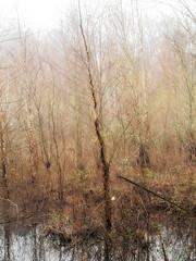 Pond mist (02) (Thomas Cizauskas) Tags: pond wetlands forest urbanforest park urbanpark naturepreserve mist fog winter dekalb dekalbcounty georgia orton
