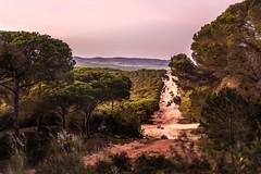 Atardecer-Quad-En un bosque de pinos- (ftjabugo1) Tags: ftjabugo quad campo bosque pinos atardecer loscañosdemeca