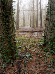 Forest mist (Thomas Cizauskas) Tags: mist fog wetlands forest urbanforest naturepreserve park urbanpark tree winter dekalb dekalbcounty georgia