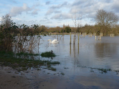 Outside the Flood Defences (sianmatthews) Tags: wilford nottinghamshire sk53 iremongerspond