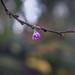 Christmas Blossom