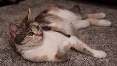 Maisy (joanjbberry) Tags: cat pet maisy