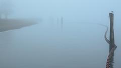 Good Morning, Barnet Fog (1 of 2) (rhino!) Tags: sunrise vancouver bc canada fog barnetmarinepark nopeople outdoors nature water tranquility sky tranquilscene scenicsnature beautyinnature idyllic