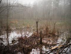 Pond mist (03) (Thomas Cizauskas) Tags: pond wetlands fog mist park urbanpark naturepreserve winter dekalb dekalbcounty georgia orton