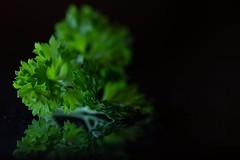 Parsley (haberlea) Tags: home parsley green herb vegetables food macromondays macro