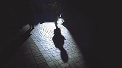 影 (ajpscs) Tags: ©ajpscs ajpscs 2020 japan nippon 日本 japanese 東京 tokyo city people ニコン nikon d750 tokyostreetphotography streetphotography street monochromatic grayscale monokuro blackwhite blkwht bw blancoynegro blackandwhite monochrome strangers urban urbanlife walksoflife tokyoscene anotherday tokyostreet lightshadow shadow strangersdarkerside shadowsoftokyo tokyoshadows 影