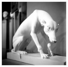 Dog (irgendwiejuna) Tags: dog rolleiflex rolleiflexk4a filmphotography ilford ilfordhp5 hp5 caffenolch caffenol museum blackandwhite nopeople mediumformat 120 6x6 munich sculpture