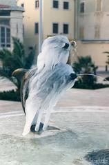 28.11.1996. Fontana Mali Lošinj (Vedran Vukotic (new)) Tags: malilosinj lussinpiccolo lošinj croatia frozen fountain ice