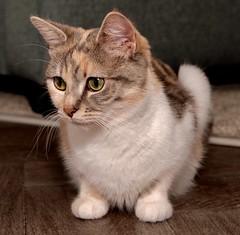 Cat sitting for Maisy (joanjbberry) Tags: cat pet xt3 fujifilm fuji maisy