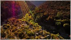 Recibiendo la luz / Receiving the light (Claudio Andrés García) Tags: trekking amanecer sunrise quebradademacul santiagochile peñalolénchile naturaleza nature montaña mountain fotografía photography shot picture cybershot flickr