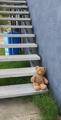 Teddy taking a rest. (IMAGES JIGGS) Tags: imagesjiggs teddy teddybear steps stairs lonely