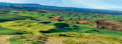 Golden hour landscape !! (pankaj.anand) Tags: 2019 agriculture clouds country countryside course farm field golf grass highland hill lake landscape meadow mountain mountains outdoor outdoors rural scenery scenic sky sonya7iii summer sunny travel tree trees washington water step palo palouse sony sonya73 sony70200 70200f4 goldenhour earlymorning green greenery