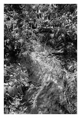 saw water (Joe Jesus) Tags: film bw hc110 homedeveloping blackandwhite nikon nikonf2 50mm ilford hp5