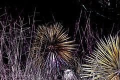 Nature (jon.cruz29) Tags: nature trees flowers plants cacti cactus succulent rock thorn leaves palmtree earth water