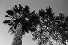 San Diego (xnedski) Tags: ca ilfordhp5 ilfotecddx sandiego usa analog f2as hp5 nikonf2