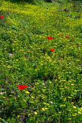R.Menashe--037-20200216 (Miki Badt) Tags: flowers naturelandscape northerndistrict israel
