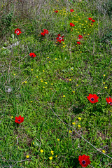R.Menashe--028-20200216 (Miki Badt) Tags: flowers naturelandscape northerndistrict israel