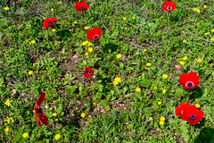 R.Menashe--022-20200216 (Miki Badt) Tags: flowers naturelandscape northerndistrict israel