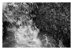 the lord's showerhead (Joe Jesus) Tags: film bw hc110 homedeveloping blackandwhite nikon nikonf2 50mm ilford hp5