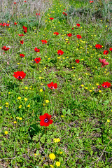 R.Menashe--010-20200216 (Miki Badt) Tags: flowers naturelandscape northerndistrict israel