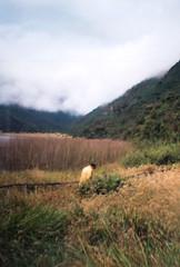 (jeancarloloor) Tags: nature ouside film kodak fuji canon pentax olympus ecuador cuenca horse caballo animal cine