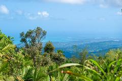 Rain Forest P.R. 02.2020-2 (Kitoon) Tags: puertorico vacation rainforest