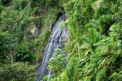 Rain Forest P.R. 02.2020 (Kitoon) Tags: puertorico vacation rainforest waterfall