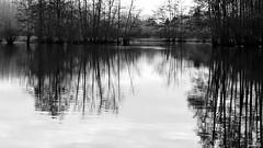 Oscillation (Un jour en France) Tags: canoneos6dmarkii canonef1635mmf28liiusm étang arbre hiver noiretblanc noiretblancfrance black monochrome reflet
