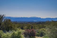 Scottsdale's McDowell Sonoran Preserve (jbarc in BC) Tags: scottsdale phoenix mcdowellsonoranpreserve arizona desert hike saguaro cactus landscape trail nikonz7 bush