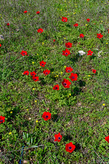 R.Menashe--025-20200216 (Miki Badt) Tags: flowers naturelandscape northerndistrict israel