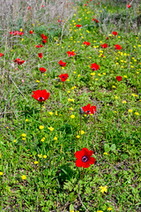 R.Menashe--012-20200216 (Miki Badt) Tags: flowers naturelandscape northerndistrict israel