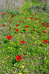 R.Menashe--011-20200216 (Miki Badt) Tags: flowers naturelandscape northerndistrict israel