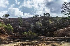 Adelaide hills (Bev-lyn) Tags: fire burnt landlandscape naturefarmlandtrees sky blackgreen