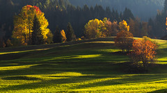 Remembering (Peter Hungerford) Tags: switzerland fall autumn trees light