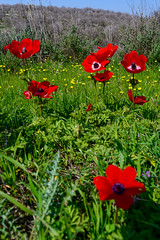 R.Menashe--019-20200216 (Miki Badt) Tags: flowers naturelandscape northerndistrict israel