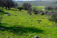 R.Menashe--008-20200216 (Miki Badt) Tags: flowers naturelandscape northerndistrict israel