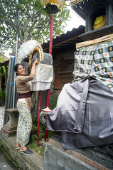 (kuuan) Tags: voigtländerheliarf4515mm manualfocus mf voigtländer15mm aspherical f4515mm superwideheliar apsc ricoh gxr mmodule ricohgxrm leicam ltm m39 leicathreadmount bali indonesia entrance balinese ubud woman lady preparing penjor smile lovely