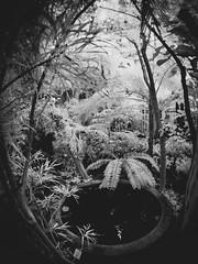 secret life of plants (miemo) Tags: europe finland ir ir830 samyang75mmf35 bw blackandwhite botanicalgarden em5mkii fisheye fountain garden helsinki infrared interior kaisaniemi omd olympus plants pond uusimaa