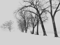 Trees (Created by M) Tags: trees snow winter
