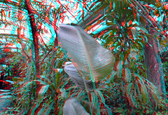 Plants tropenkas Blijdorp 3D (wim hoppenbrouwers) Tags: anaglyph stereo redcyan plants tropenkas blijdorp 3d green plant greenhouse zoo leaf blad