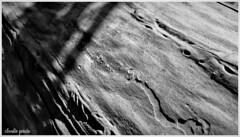 Piel natural / Natural skin (Claudio Andrés García) Tags: árboles trees madera wood macro aguasderamónchile lareinachile santiagochile blancoynegro blackandwhite blackwhite bw monocromático monochromatic fotografía photography shot picture naturaleza nature cybershot flickr